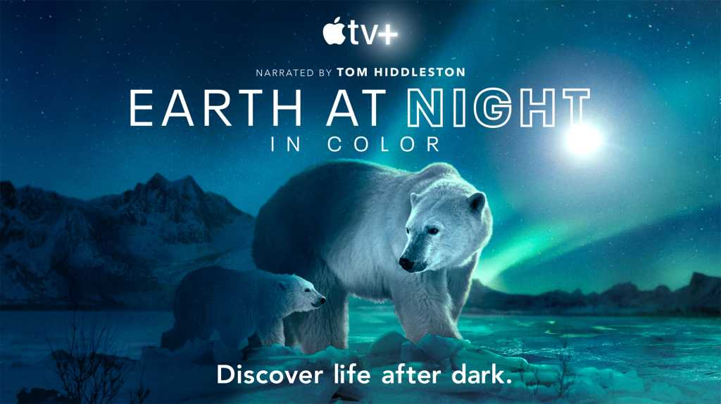 The Earth at Night in Color